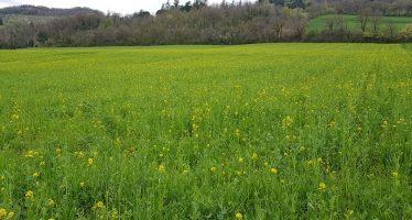 Tre nuovi erbicidi per controllare le infestanti difficili dei cereali