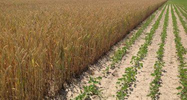 Non si può stabilire per legge che l'agricoltura biologica è migliore della convenzionale