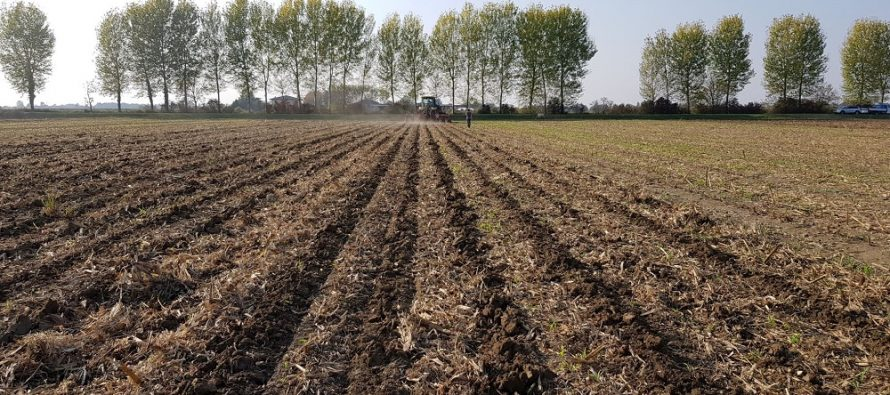 Costi e ricavi dell'agricoltura di precisione applicata al mais da granella 2019