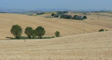 """Farina sostenibile Barilla, le 10 regole della """"Carta del Mulino"""" coinvolgono 5mila aziende"""