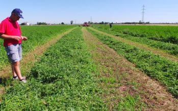 I ricercatori universitari servono all'agricoltura italiana?