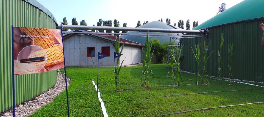 Fertirrigare il mais con 100% digestato: la novità sostenibile di Netafim