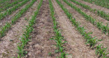 Semina su sodo: meno gasolio, più carbonio organico e terreno sano