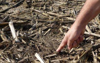 Aratura e sodo a confronto per 8 anni: come cambiano qualità e vitalità del terreno