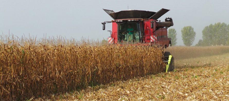 Mais, il vantaggio della dose variabile di seme è 17 quintali/ettaro