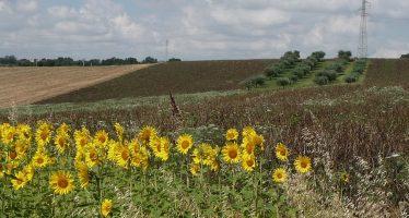 """Svolta storica nelle imprese agricole: il manager diventa """"verde"""""""