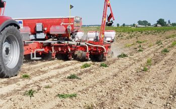 Come recuperare reddito dalla coltura del mais? Ve lo diciamo venerdì a Cremona