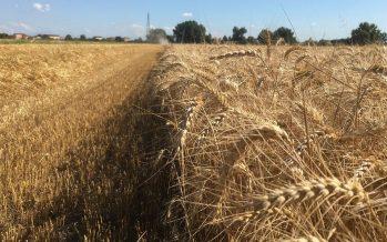 """Agricoltura, il """"modello Findus"""" che fa tornare i conti per i seminativi"""
