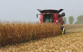 Mais, è ufficiale: il reddito aumenta di 386 euro/ettaro con minima lavorazione e dose variabile di seme