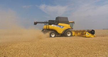 Cereali: la mietitrebbia è ancora una macchina redditizia in Italia?