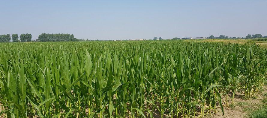 Agricoltura: se si passa dall'aratura alla minima, non è vero che si produce di meno