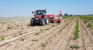 Interrare i residui colturali distrugge la fertilità dei terreni
