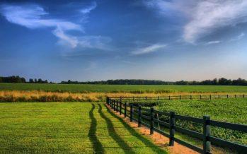 Acquisto di terreno agricolo senza titoli: cosa succede con la nuova Pac?