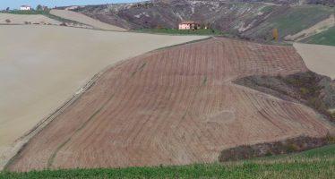 10mila ettari in vendita per i giovani agricoltori: il bando Ismea