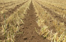 Residui colturali, minima e micotossine: facciamo chiarezza