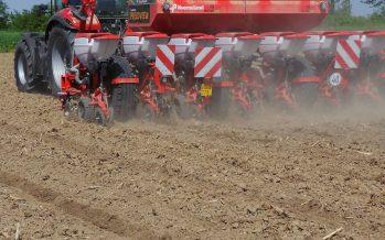 Mais: fosforo e azoto alla semina anticipano la fioritura e aumentano la produzione