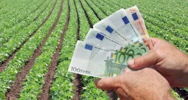 Governo stanzia 70 milioni di euro all'agricoltura: tutti i dettagli dei sostegni