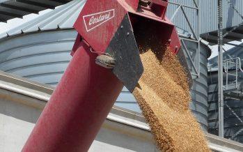 Per De Cecco non basta il grano italiano per fare una pasta eccellente