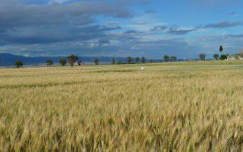 Non c'è traccia dell'agricoltura nei progetti per far ripartire l'Italia post-covid