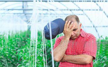 """""""Agricoltore, dimostrami che sei attivo"""": l'assurda pretesa dell'organismo pagatore della Pac"""