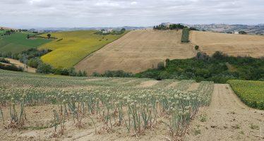 Nel piano di rilancio dell'Italia non si parla di agricoltura: lo dice anche Rizzo su Repubblica