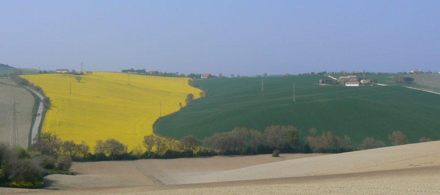 Doppio valore alla terra con colza e soia in secondo raccolto: l'ottima proposta di Cereal Docks