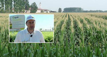 """""""Si può coltivare mais rispettando ambiente e biodiversità: i cittadini devono saperlo"""""""
