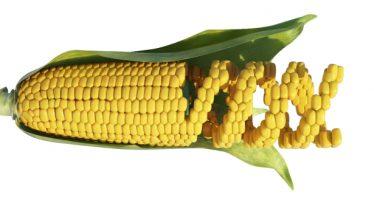 Il Nobel al Crispr è una grande opportunità per l'agricoltura
