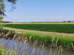 Nuova Pac: l'agricoltura biologica continua a crescere, ma occorre un giusto equilibrio con la produzione convenzionale