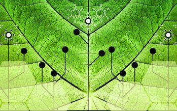 Il vaccino Covid-19 riuscirà a cancellare l'ottusa opposizione verso le piante biotech?