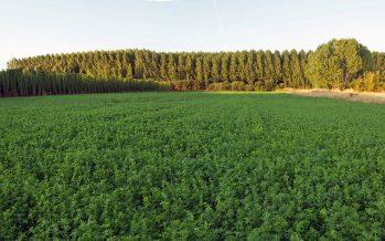 """""""Una Pac sempre più verde"""": le risposte ai lettori"""