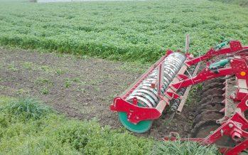 Cover crops, come effettuare la giusta scelta della specie