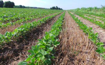 Come conciliare minima lavorazione e sodo con la riduzione degli agrofarmaci