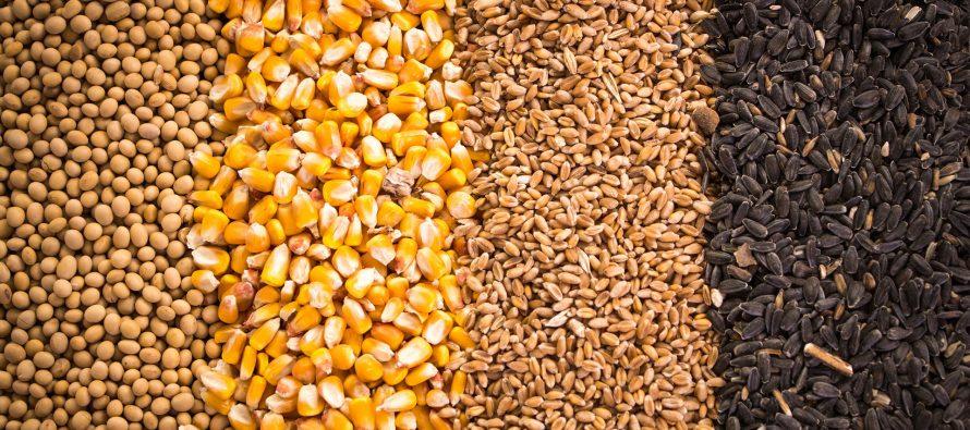 Mais, soia e grano 2021: mercati dinamici, ma con prezzi alti