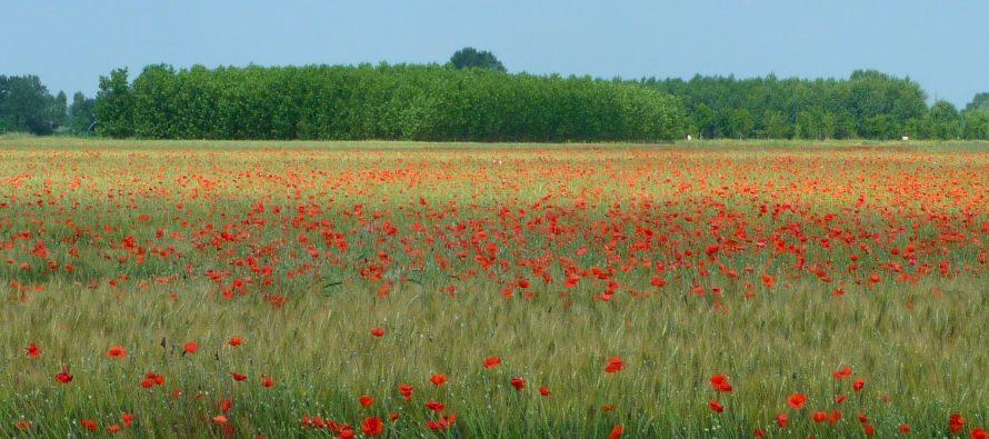 Obiettivo 2030: sempre piu verdi con il bio