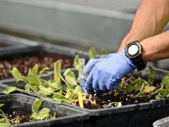 Agricoltura, le Regioni litigano per dividersi 7 miliardi di aiuti europei