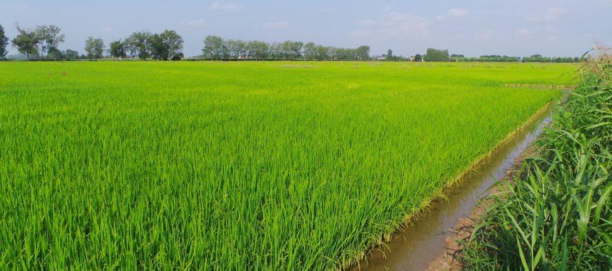 Agricoltura, la sostenibilità va certificata e comunicata