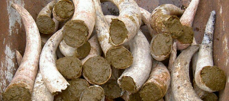 La legge sul biologico finanzia cornoletame e vesciche di cervo