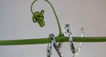 Plantoide, il robot-pianta che rivoluziona l'agricoltura e il pianeta