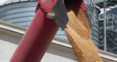 Agricoltura, volano i prezzi delle materie prime: tensione sui mercati