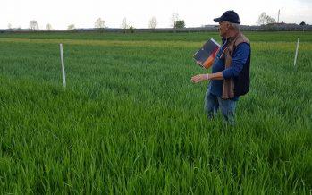Da contadino a imprenditore agricolo: un mestiere che non è per tutti