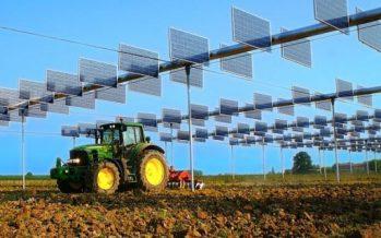 Agrivoltaico, il connubio vincente tra buon cibo ed energia pulita