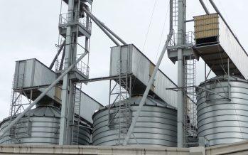 Arrivano i controlli sugli agricoltori che usano semi aziendali