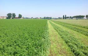Più erba medica e meno emissioni per valorizzare il made in Italy